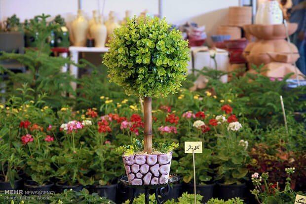 برنامه گل و گیاه و دکوراسیون