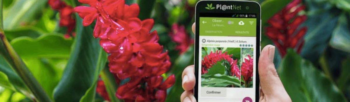بررسی و دانلود برنامه PlantNet ؛ گیاه شناسی با دوربین گوشی